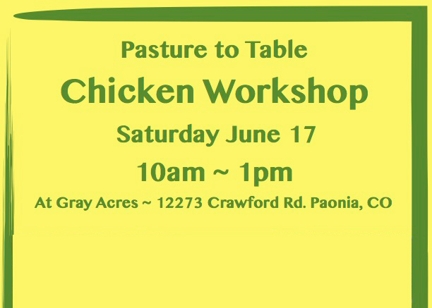 Chicken Workshop