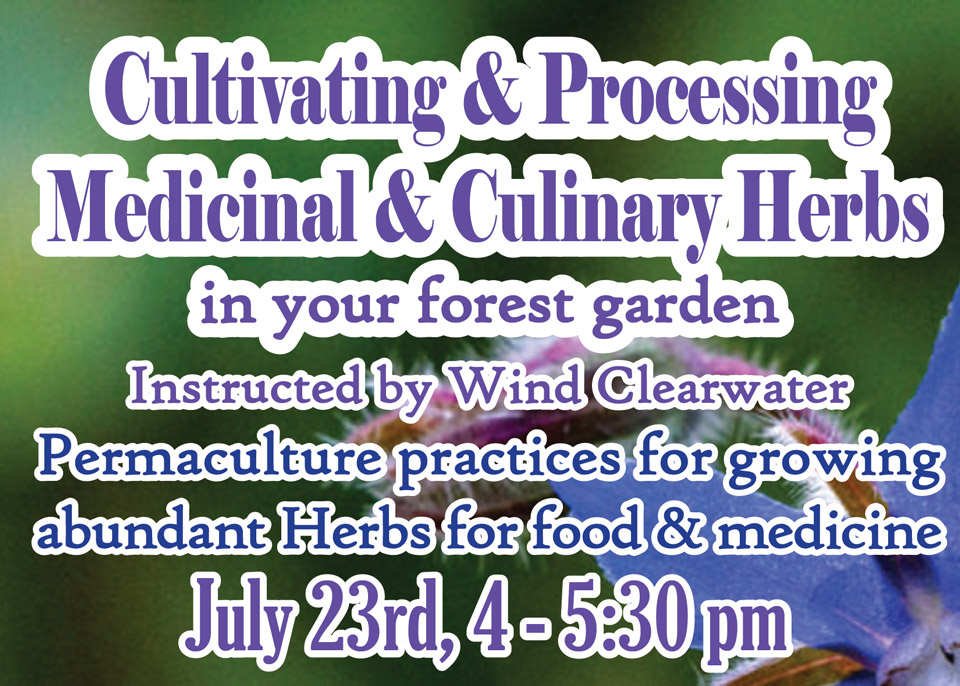 Cultivating and Processing Medicinal and Culinary Herbs featured image
