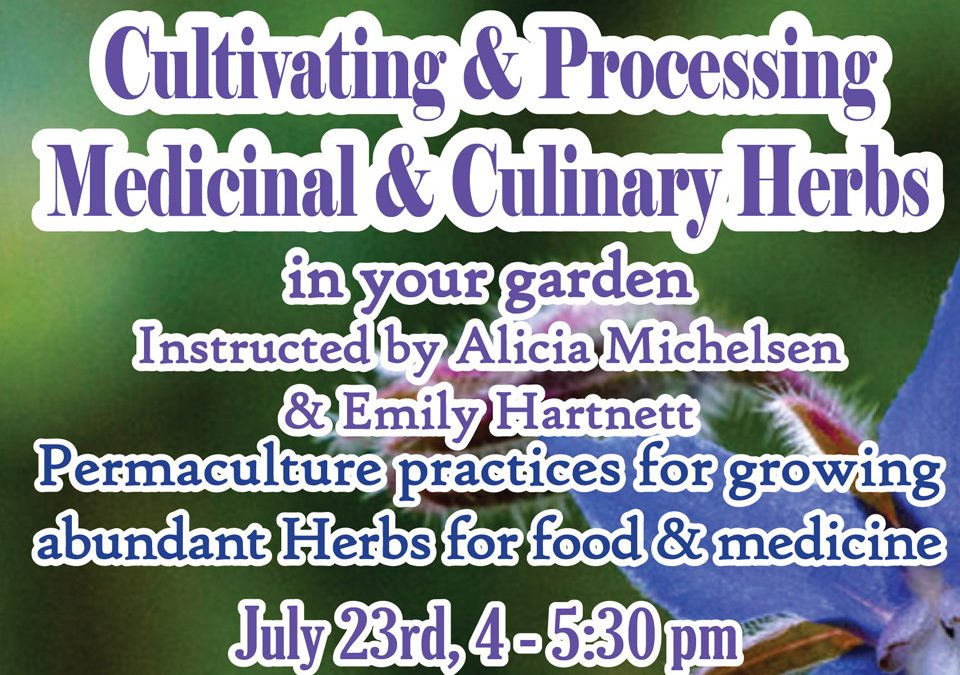 Cultivating and Processing Medicinal and Culinary Herbs