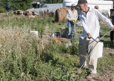 Cultivating Heirloom Grain