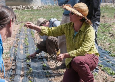 Image of Daphne Yannakakis planting perennials at Zephyros Farm