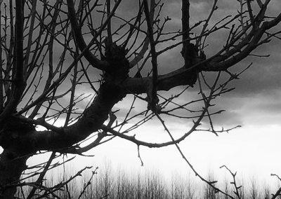 Tree Pruning Workshop Image