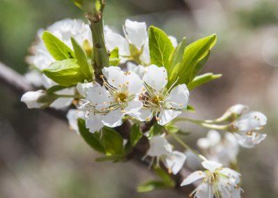 Image of blossoms at Biodynamic Sprays Workshop