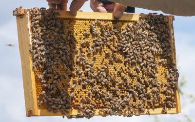 Beekeeping Workshop
