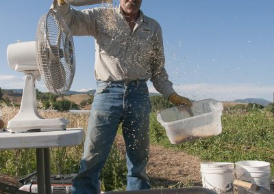 Cultivating Heirloom Grain image