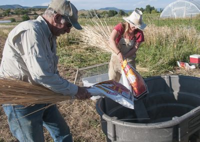 Cultivating Heirloom Grain