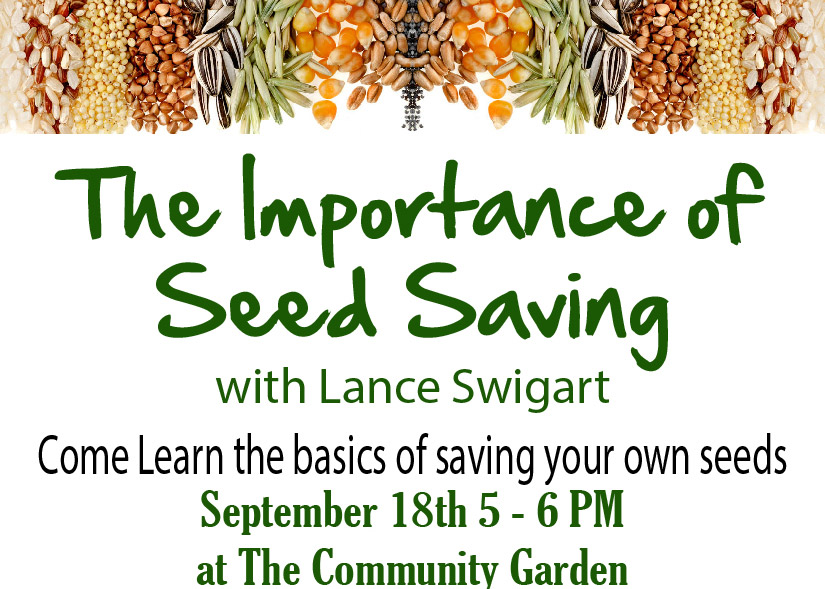 Seed Saving featured image