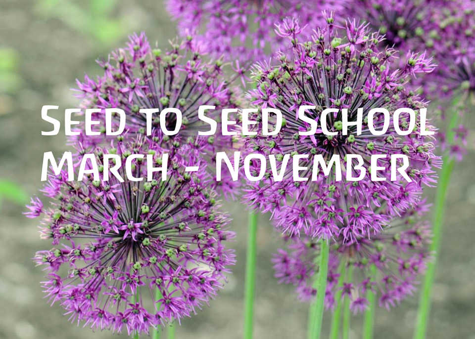 Seed to Seed School featured image