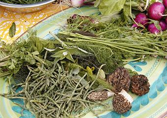 Wild Foods image