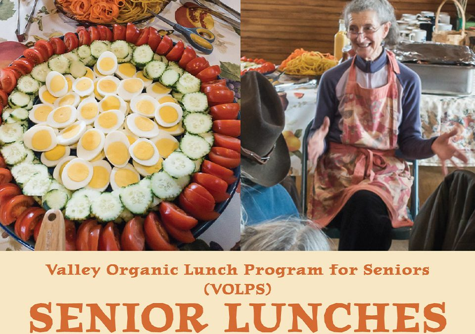 Senior Lunches