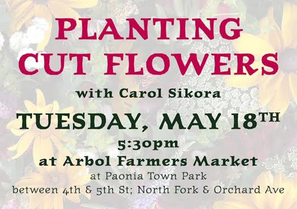 Planting Cut Flowers